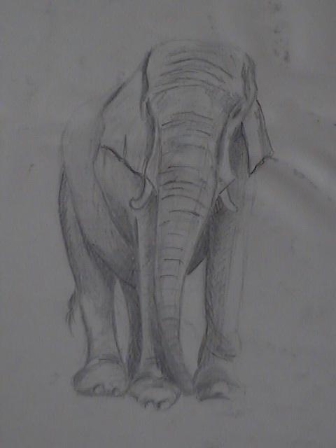 Animales dibujados a lapiz - Imagui